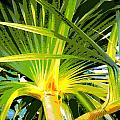 Tropical  Leaves by Tina Meador