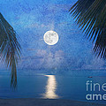 Tropical Moonglow by Betty LaRue