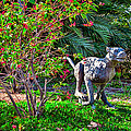 Tropical Mountain Lion by Omaste Witkowski