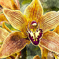 Tropical Orchid by Carrie Cranwill