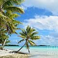 Tropical Beach With Hanging Palm Trees In The Pacific by IPics Photography