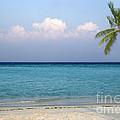 Tropical Paradise by Rosemary Calvert