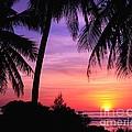 Tropical Paradise by Scott Cameron