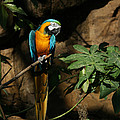 Tropical Parrot by Judy Whitton