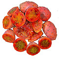 Tropical Red Prickly Pear Fruit  by Taiche Acrylic Art