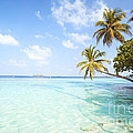 Tropical Sea In The Maldives - Indian Ocean by Matteo Colombo