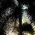 Tropical Silhouette by Ian  MacDonald