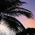 Tropical Sunset by Elena Paskova