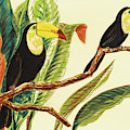 Tropical Toucans II by Linda Baliko