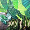 Tropical Translucence by Patricia Devitt