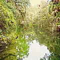 Tropical Treasure by Judy Hall-Folde