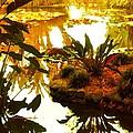 Tropical Water Garden by Amy Vangsgard