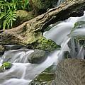 Tropical Waterfall by Doug Dailey