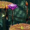 Tropical Waterlily Elegance by Byron Varvarigos