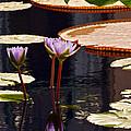 Tropical Waters Floral Charm by Byron Varvarigos