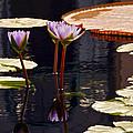 Tropical Waters Floral Charm -- Version 2 by Byron Varvarigos