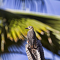 Tropical Woodpecker by Peggy Collins