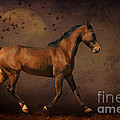 Trotting Into The Night by Karen Slagle