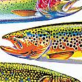Trout Abstraction by JQ Licensing
