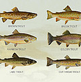 Trout Species by Aged Pixel