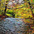 Trout Stream by Richard Fisher