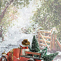 Truck Carrying Christmas Trees by Amanda Elwell
