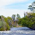 Truckee River  by Brent Dolliver