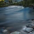 Truckee River by Dianne Phelps