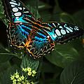 True Blue by Louis Rivera