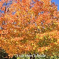 True Colors by Gordon Elwell