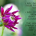 True Face - Poem - Flower by Marie Jamieson
