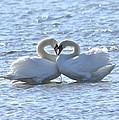True Love by Lorelei Galardi