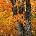 Trunks In Orange by Gene Cyr