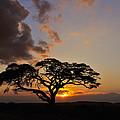 Tsavo Sunset by Tony Beck