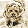 Tucker In The Snow by Ola Allen