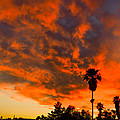 Tucson Arizona Sunrise Fire In The Sky by Michael Moriarty