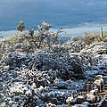 Tucson Covered In Snow by Michael Moriarty