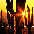 Tucson Sunset by Ed  Riche