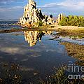 Tufa Tide Pool by Adam Jewell