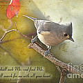 Tuffted Titmouse With Verse by Debbie Portwood