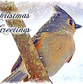 Tufted Titmouse Christmas Card by Debbie Portwood