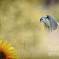 Tufted Titmouse Flying Over Flower by Dan Friend