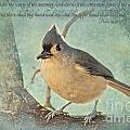 Tufted Titmouse With Verse IIi by Debbie Portwood