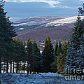 Tulchan Estate - Early Winter by Phil Banks