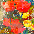 Tulip Abstracts by Carol Groenen