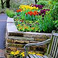 Tulip Bench by Stacy Shebesta