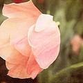 Tulip Blush by Emily Kay