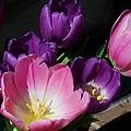 Tulip Bouquet 1 by Marcus Dagan