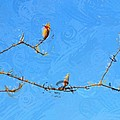 Tulip Branches by Cindy  Whitehead