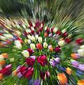 Tulip Explosion by Claudio Bacinello